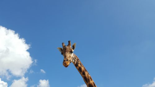 I tried to befriend this giraffe, but he had some extreme views
